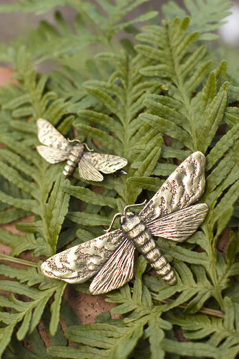 Large Puriri Moth Brooch