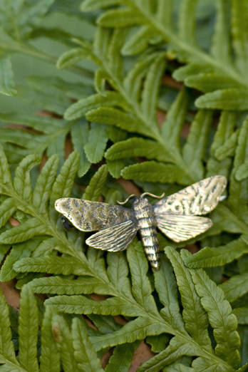 Small Puriri Moth Brooch